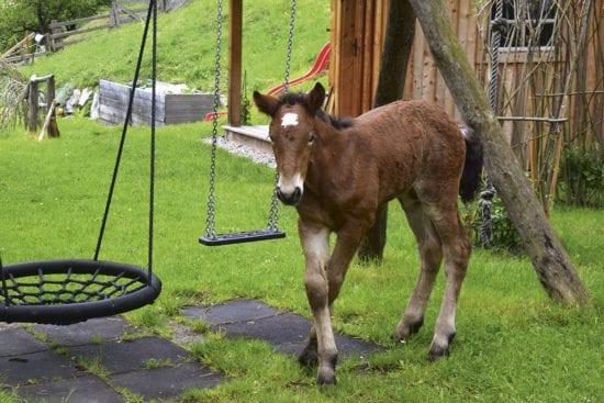 Pferd - Urlaub am Bauernhof Reitbauernhof in Großarl
