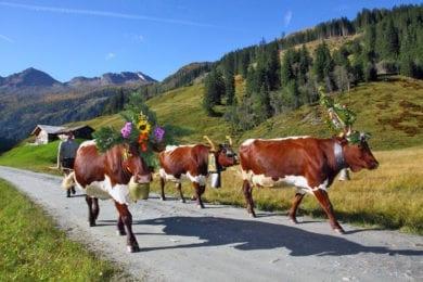 Almabtrieb –Hofeigene Almhütte in Großarl, Hubgrundalm im Tal der Almen, Salzburger Land