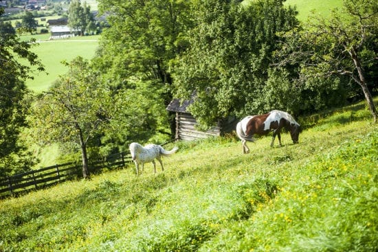 Ponys am Reitbauernhof, Großarl, Salzburger Land –Urlaub am Bauernhof in Österreich