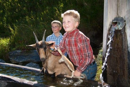 Ziege - Urlaub am Bauernhof Reitbauernhof in Großarl