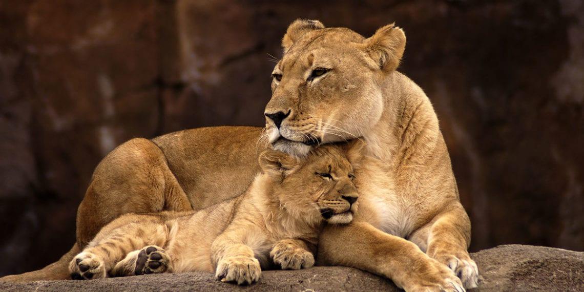 Zoos & Tierparks - Ausflugsziel im Salzburger Land